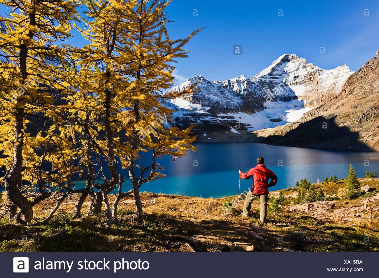 Escursionista che si affaccia sul Lago di McArthur e Monte Biddle, Parco Nazionale di Yoho, British Columbia Immagini Stock