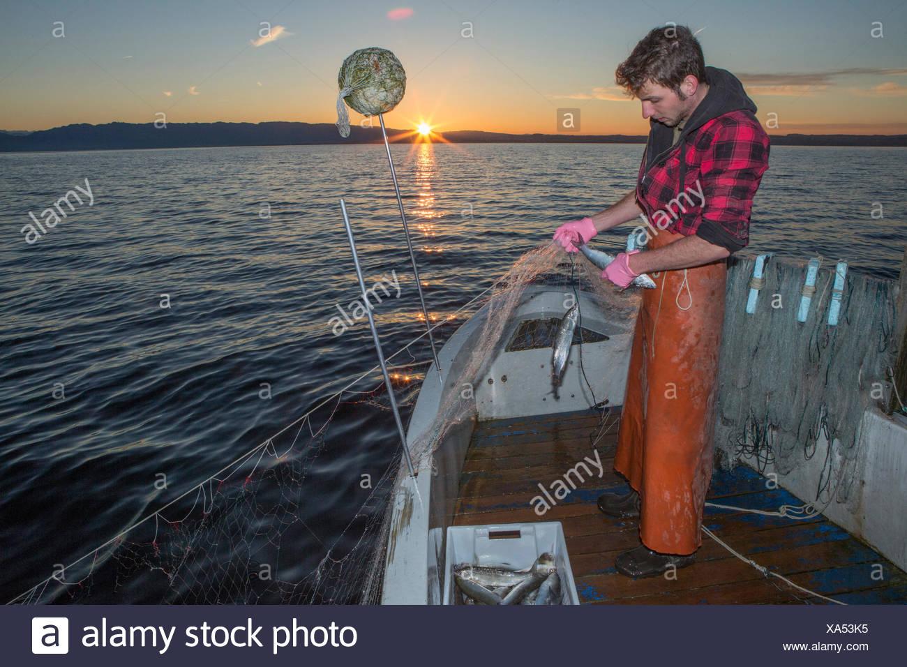 Il lago di Costanza, pescatore, il lago di Costanza, molla, Claudio Timo Görtz, lavoro, lavoro, occupazione, professione, occupazioni professio Immagini Stock