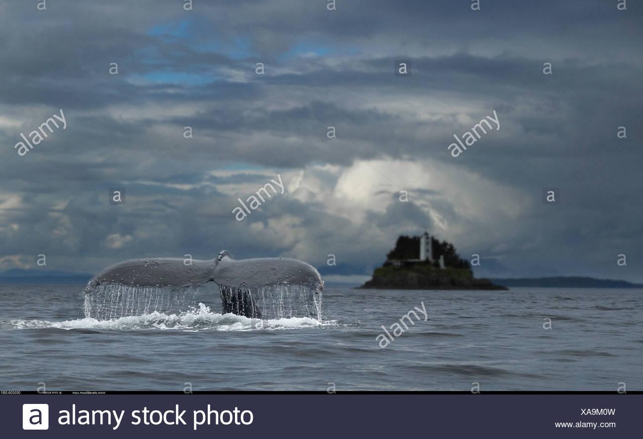 Humpback Whale e cinque dita Lighthouse Petersberg Alaska Immagini Stock