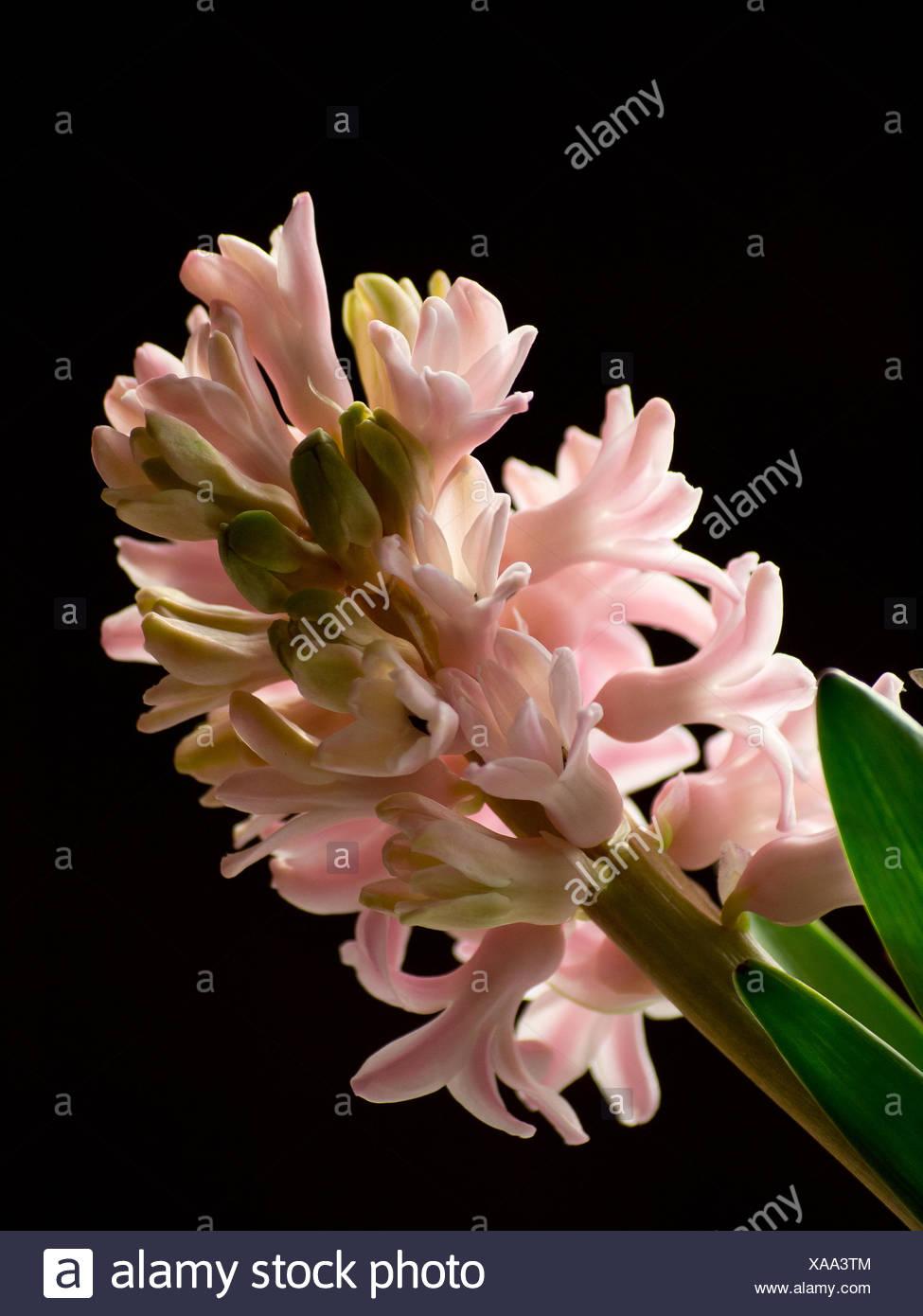 Bellissimo fiore Immagini Stock