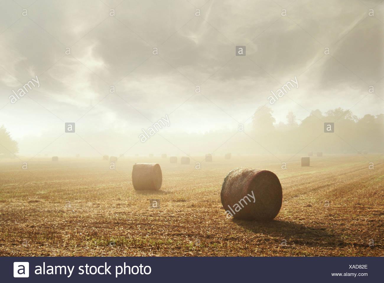 Round balle di fieno in un campo Immagini Stock