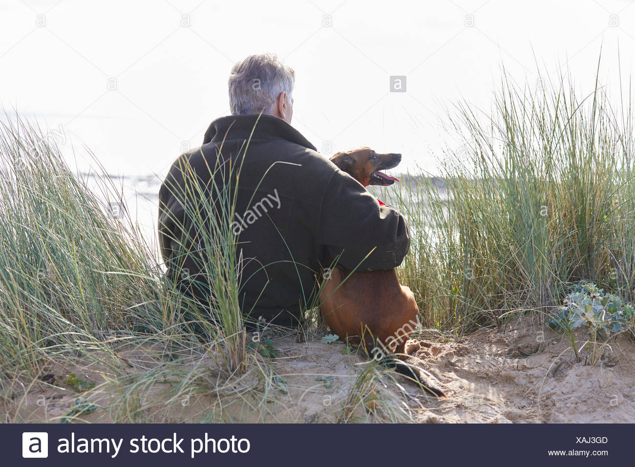 Vista posteriore di uomo e cane seduti sulle dune di sabbia, Constantine Bay, Cornwall, Regno Unito Immagini Stock