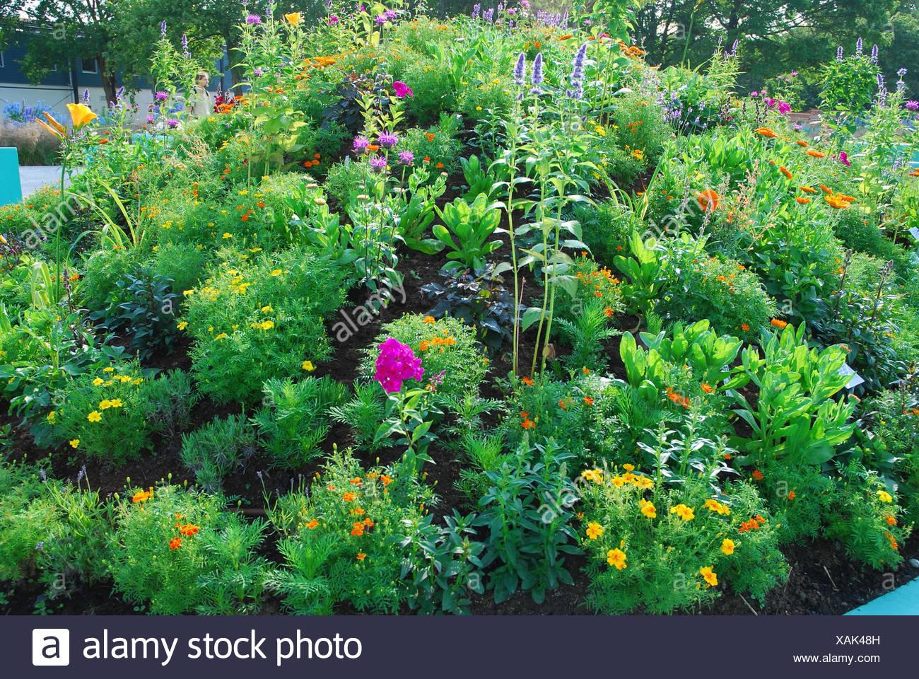 Giardino Di Erbe Aromatiche Cottage Gardens Foto Immagine Stock
