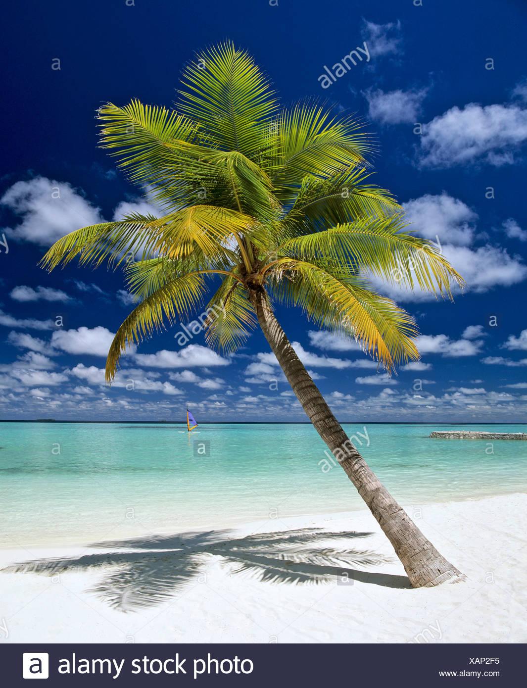 Palm Tree, la spiaggia e il windsurf, Maldive, Oceano Indiano Immagini Stock