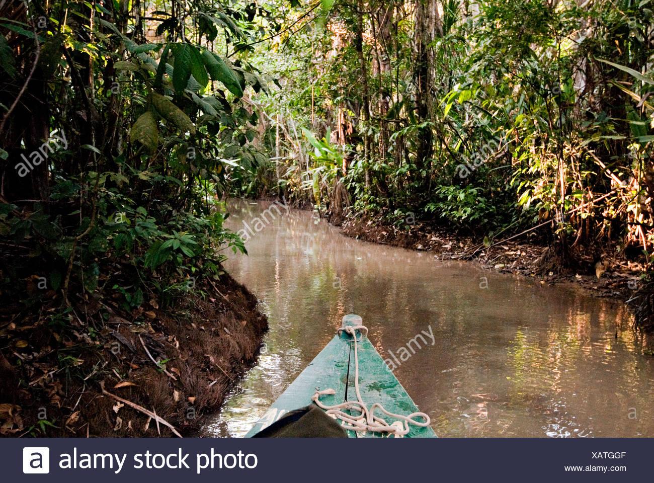 La foresta pluviale amazzonica Puerto Maldanado, Perù. Immagini Stock