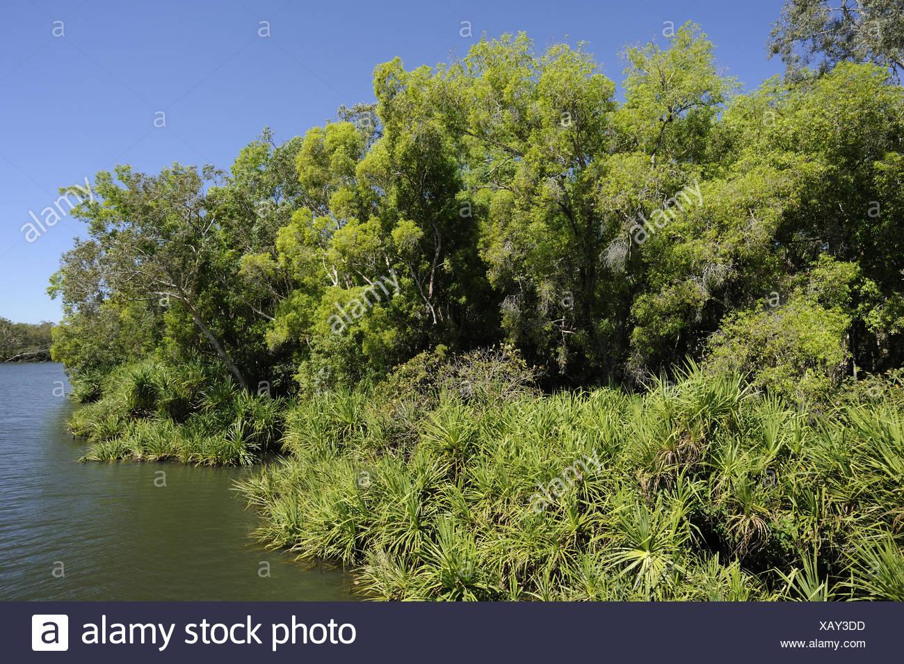Galleria, lato fiume, il Fiume South Alligator, Brett Hochman attraversando il Parco Nazionale Kakadu, Territorio del Nord, l'Australia Foto Stock