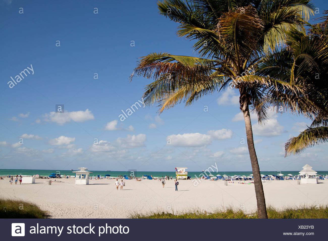 Palme da cocco sulla spiaggia, South Beach, Miami, Florida, Stati Uniti d'America Foto Stock