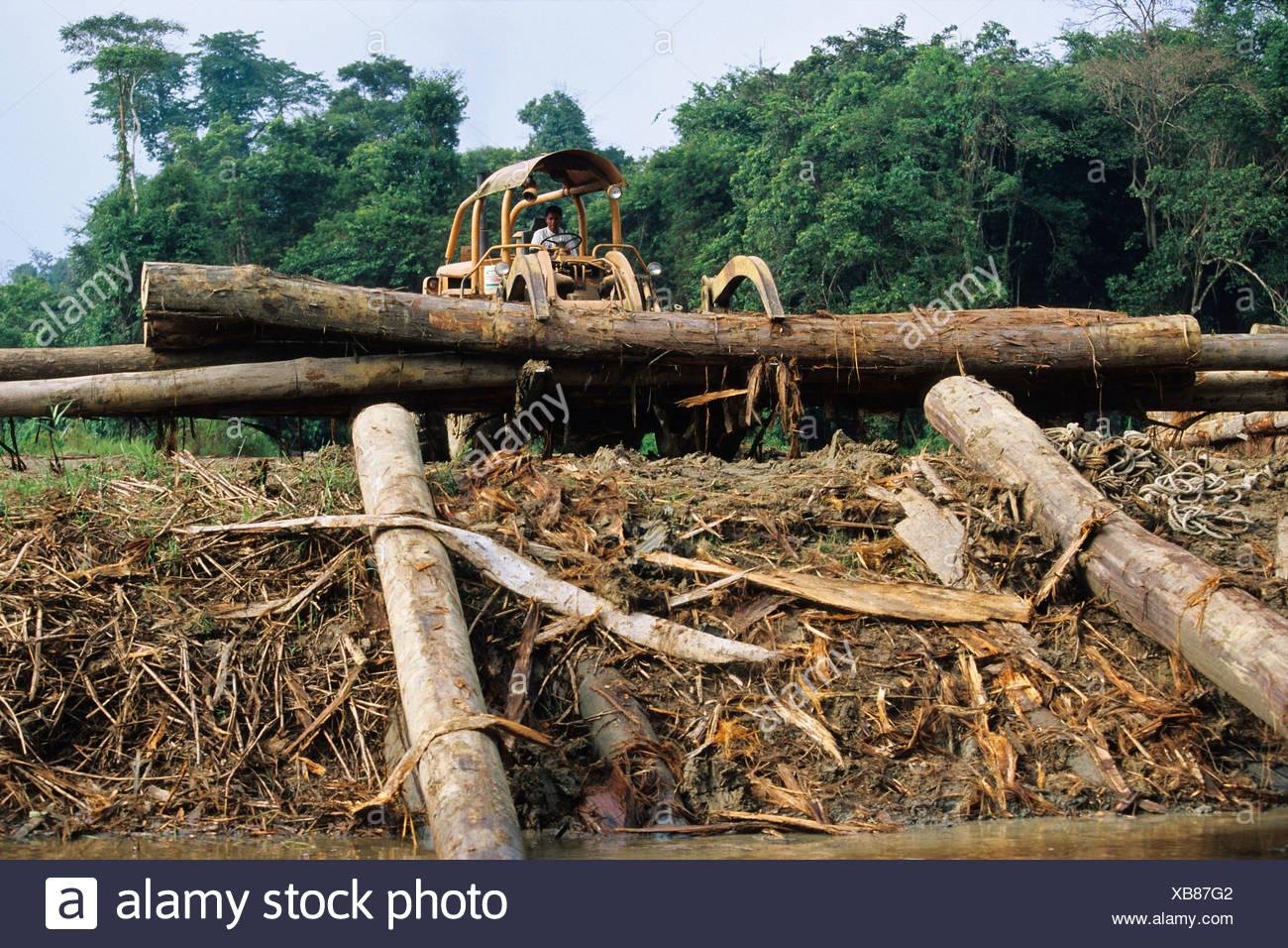 La distruzione della foresta pluviale, deforestazione, Borneo, sud-est asiatico Immagini Stock