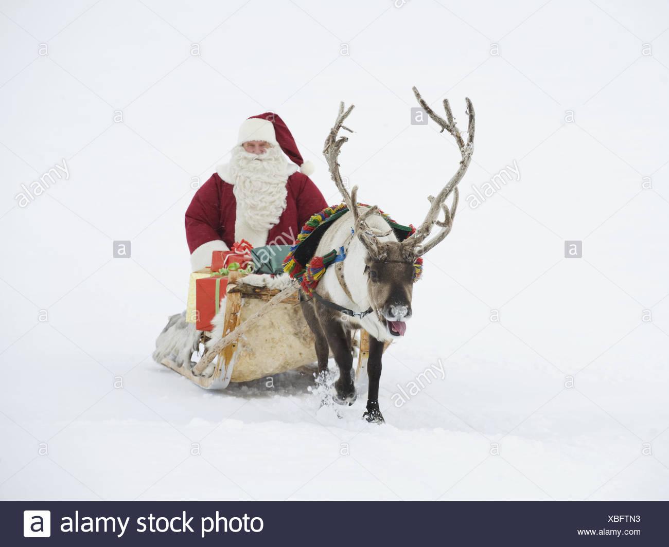 Renne Babbo Natale.Un Tiro Di Renne Babbo Natale E La Sua Slitta Di Regali Foto