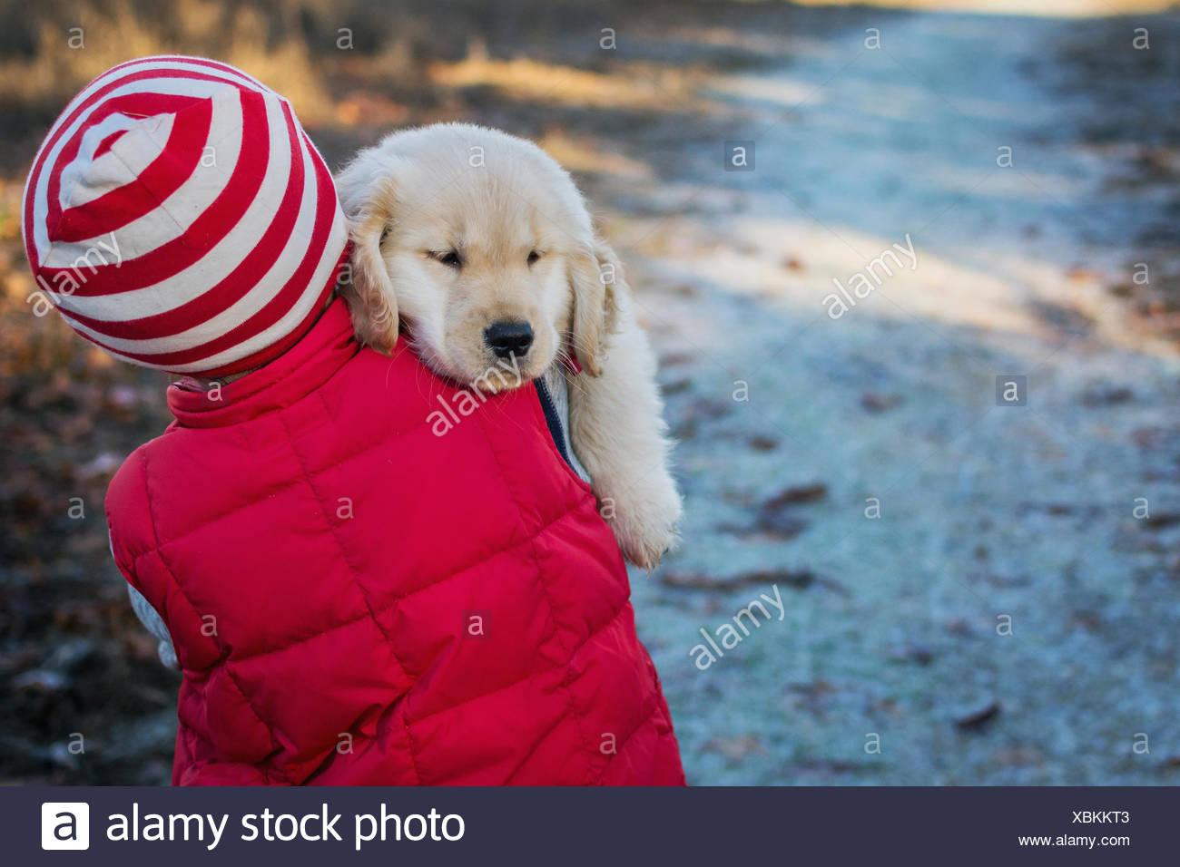 Sleepy golden retriever cucciolo di cane essendo portato da ragazzo Immagini Stock