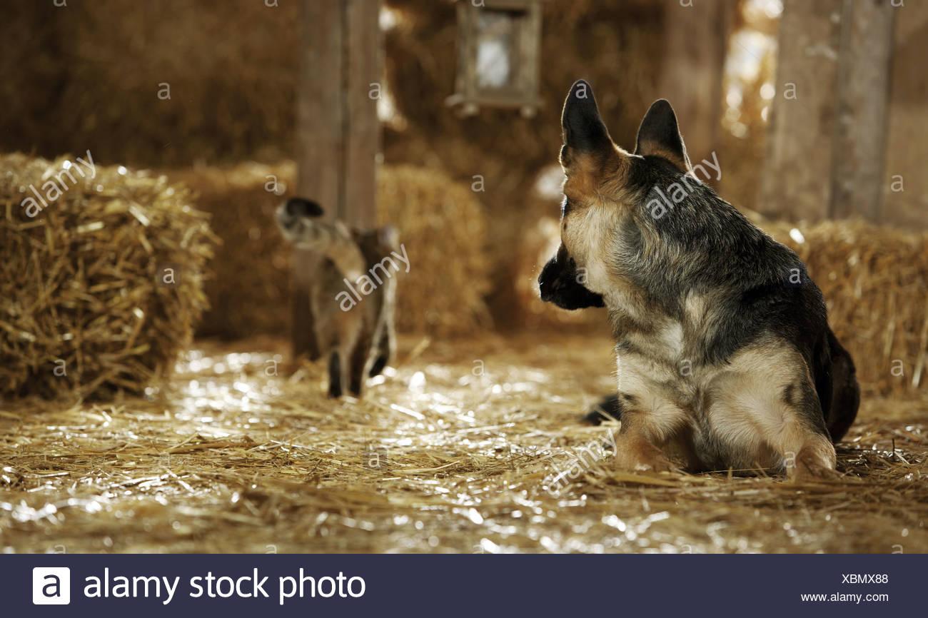 Amicizia Animali Pastore Tedesco Del Cane E Del Gatto Domestico In