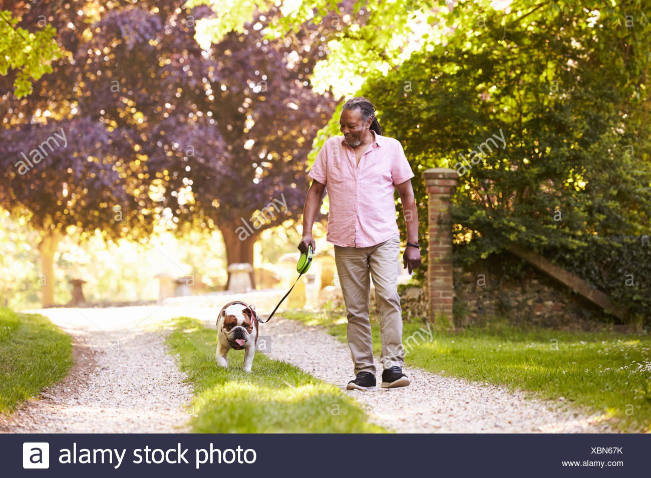 Senior uomo a camminare con pet bulldog in campagna Immagini Stock
