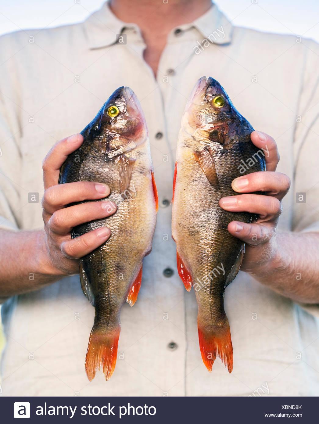 Uomo con coppia di pesce fresco Immagini Stock