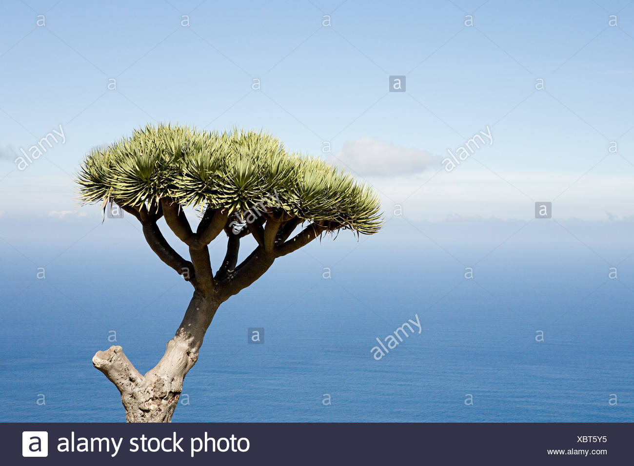 Un unico albero con il blu del cielo e del mare dietro Immagini Stock