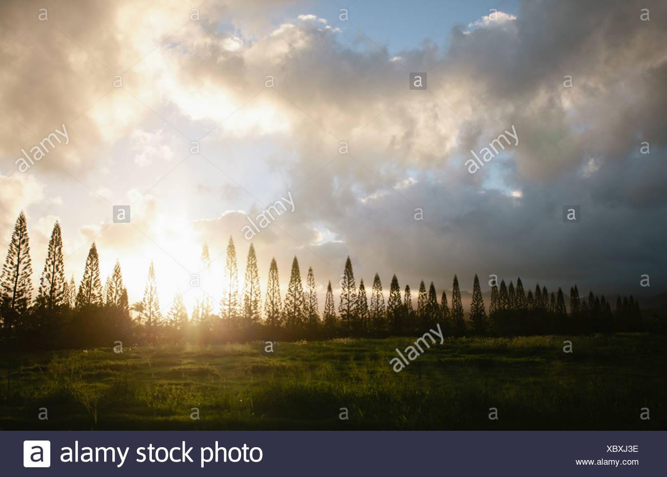 Sole che splende attraverso gli alberi di nudo Immagini Stock