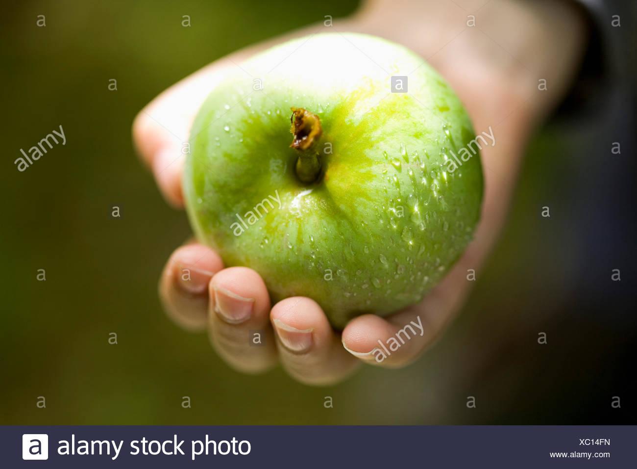 Mano che tiene fresco verde mela Foto Stock