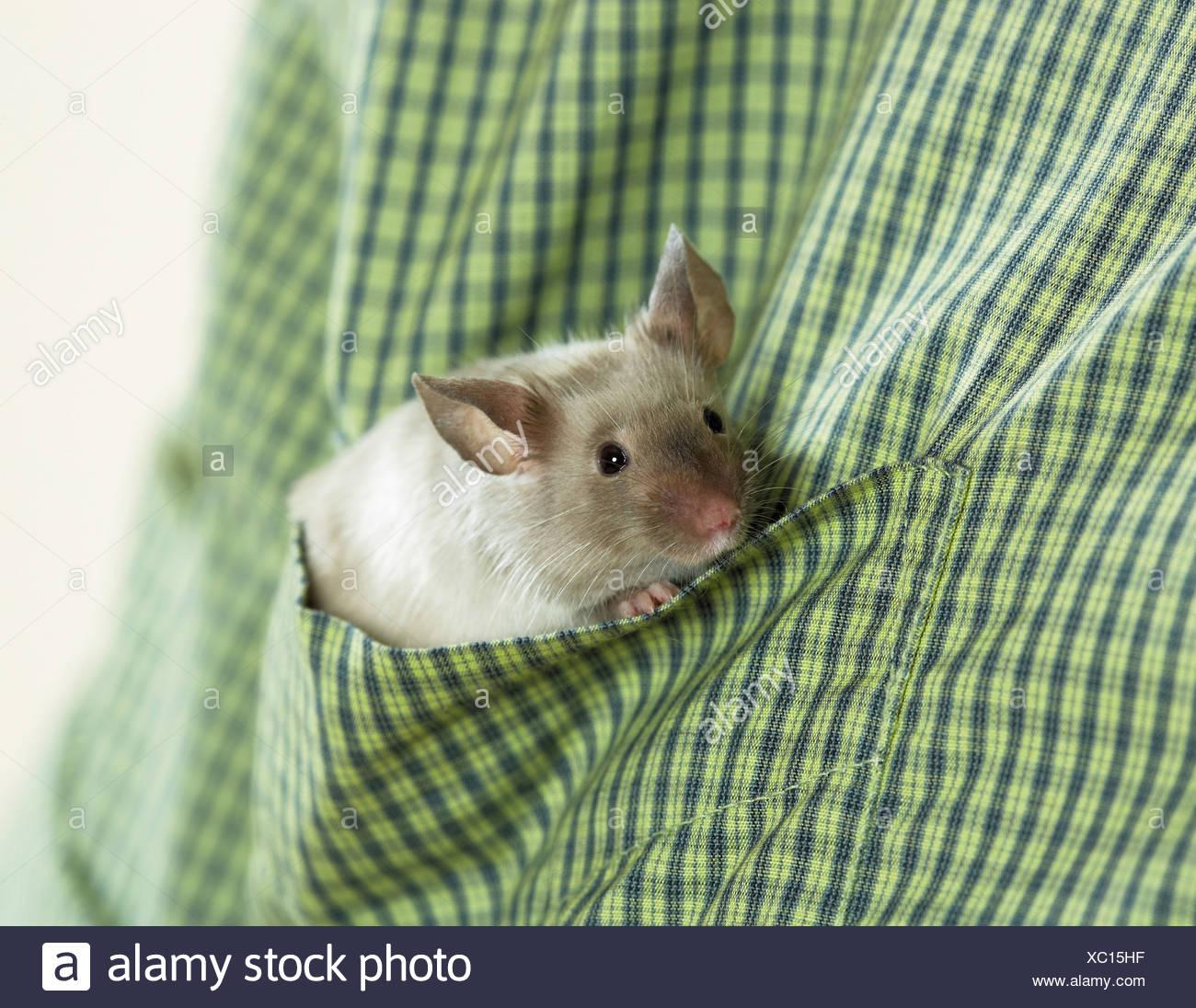 Mouse di fantasia in camicia Immagini Stock