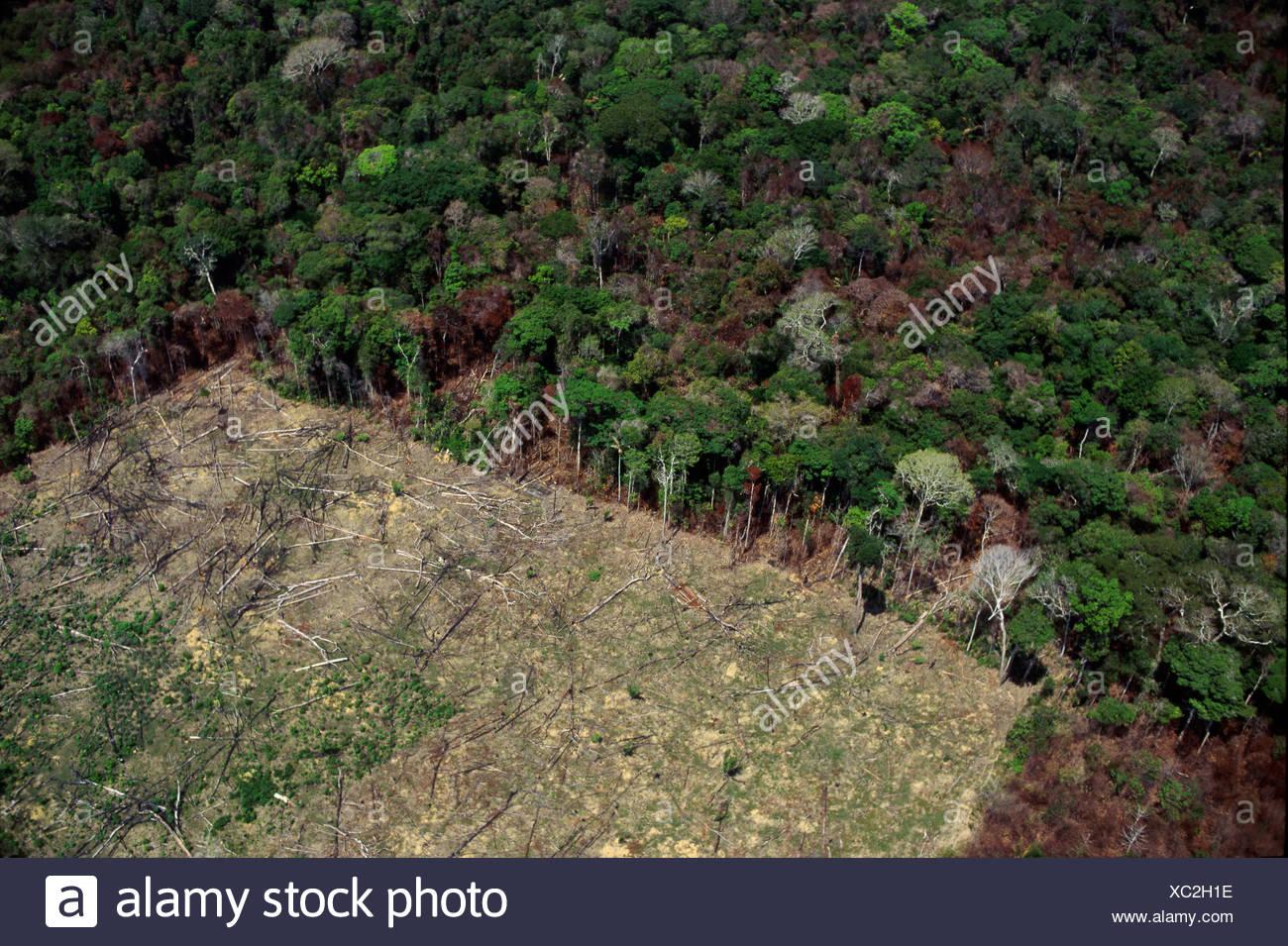 Vista aerea di disboscamento e deforestazione Amazon rain forest, Brasile. Immagini Stock