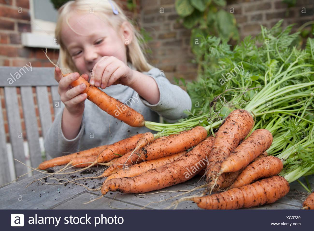 Un bambino di ispezionare appena raccolto le carote con fango su m. Immagini Stock