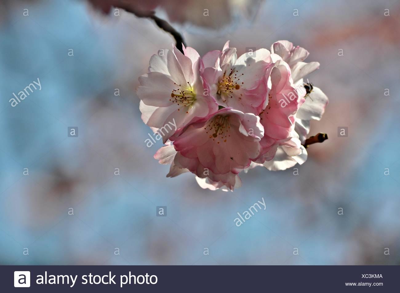 Blossom prosperare Immagini Stock