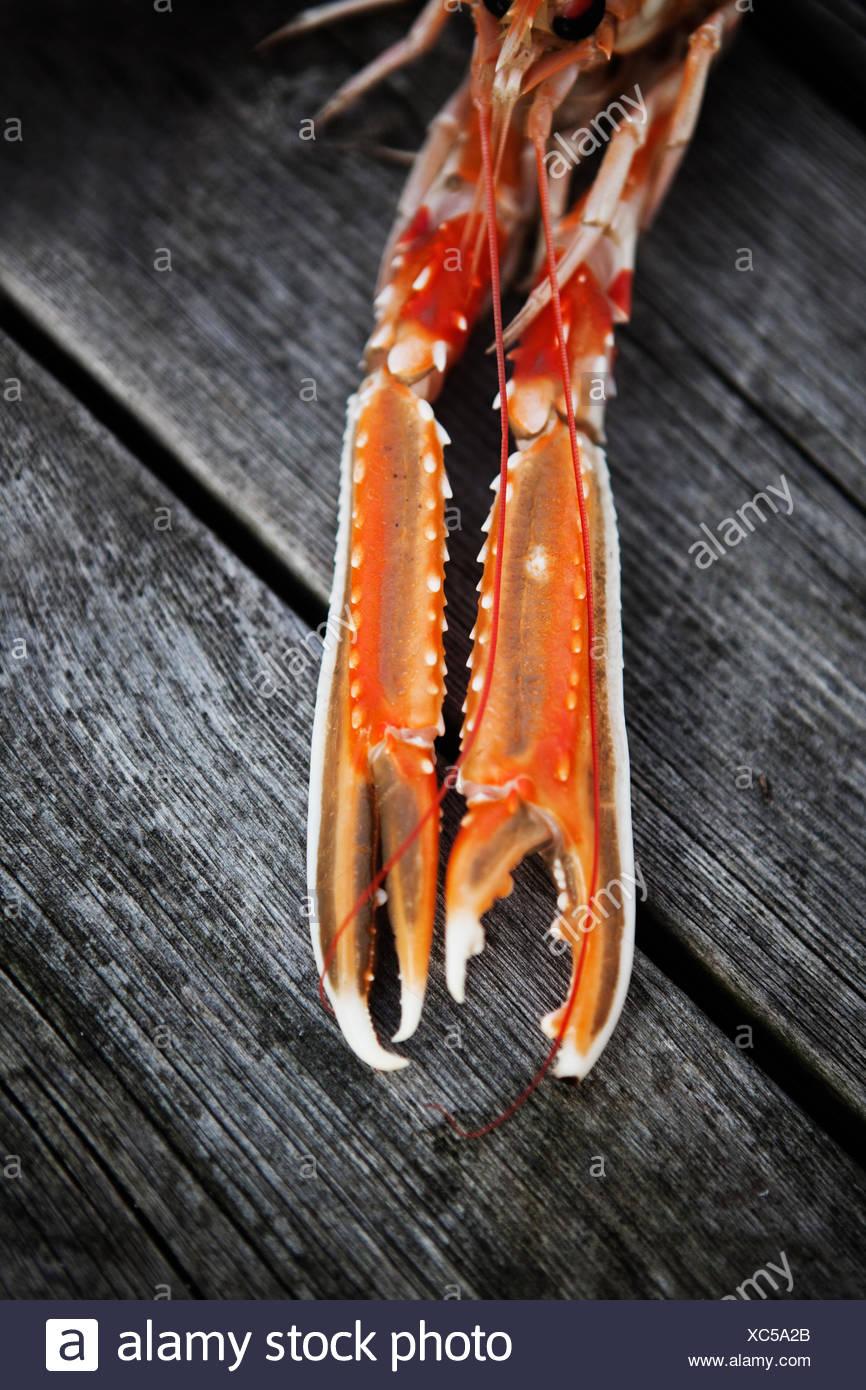 La Svezia, Bohuslan, Grebbestad, la graffa di molluschi e crostacei su legno Immagini Stock