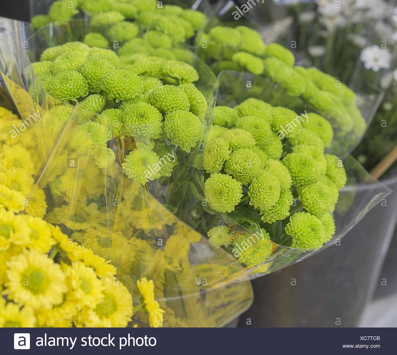 Fiori Giallo Verdognoli A Grappolo.I Grappoli Di Fiori Verdi Crisantemi Presso Il Mercato Dei Fiori