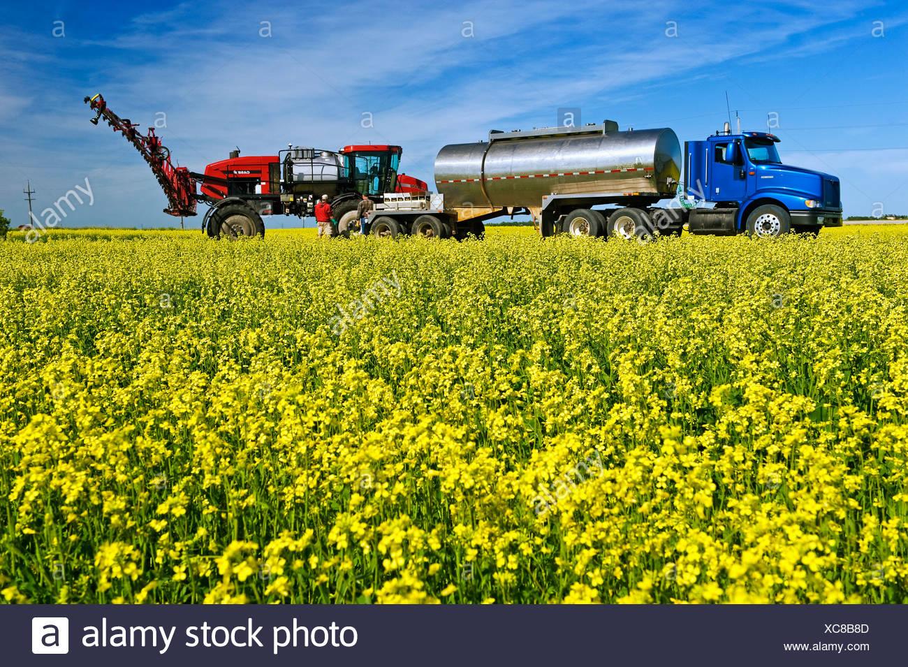 Un agricoltore carichi il suo gioco alto irroratrice con azione fungicida e acqua a spruzzo una fioritura di raccolto di canola per Sclerotinia / Canada. Immagini Stock