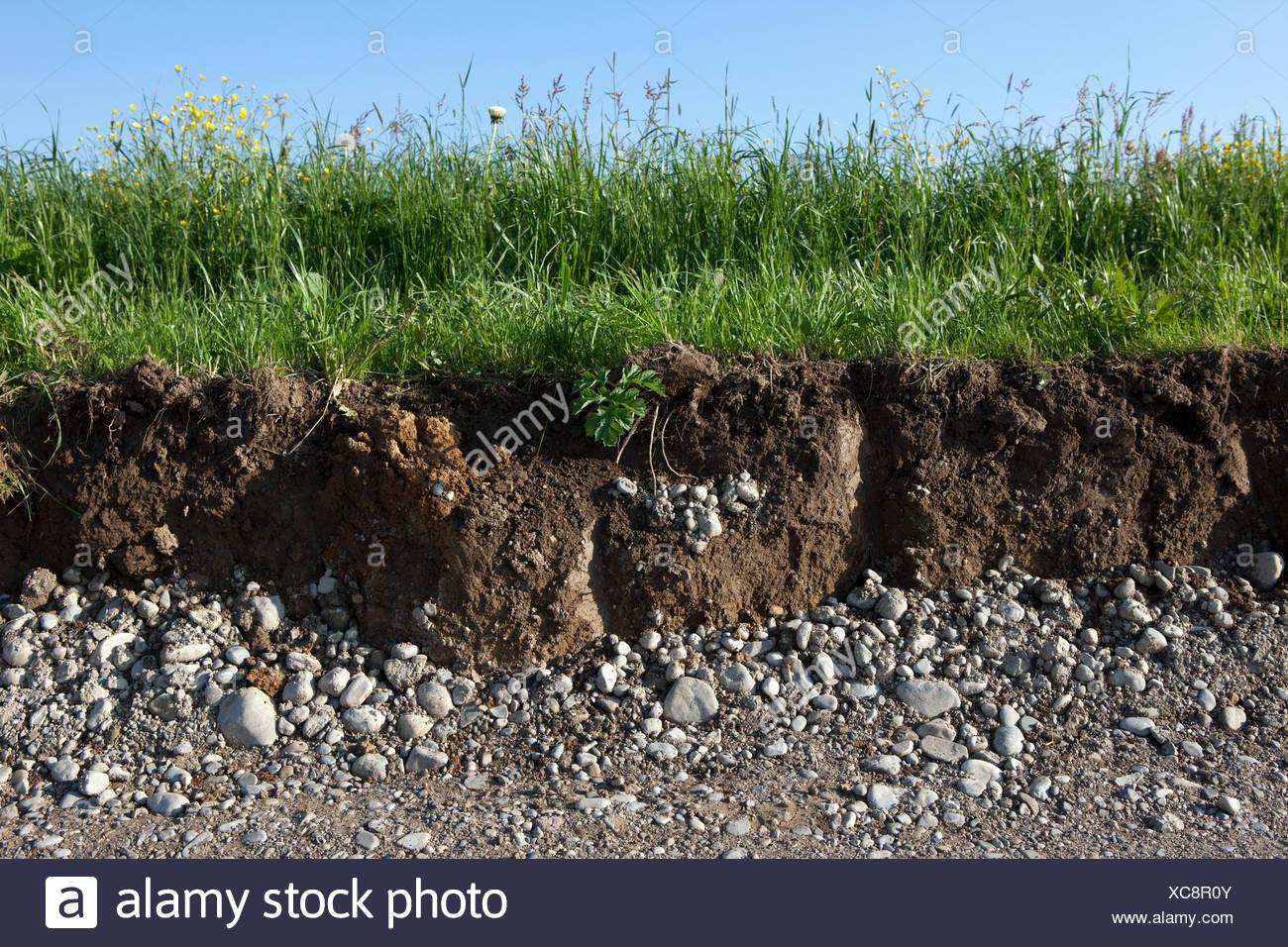 Terreno di erba e di sezione trasversale Immagini Stock