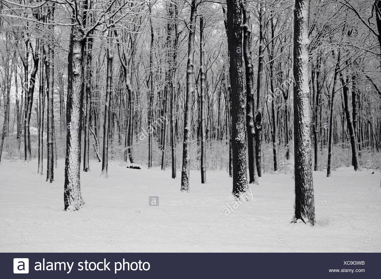 Bosco in inverno Immagini Stock