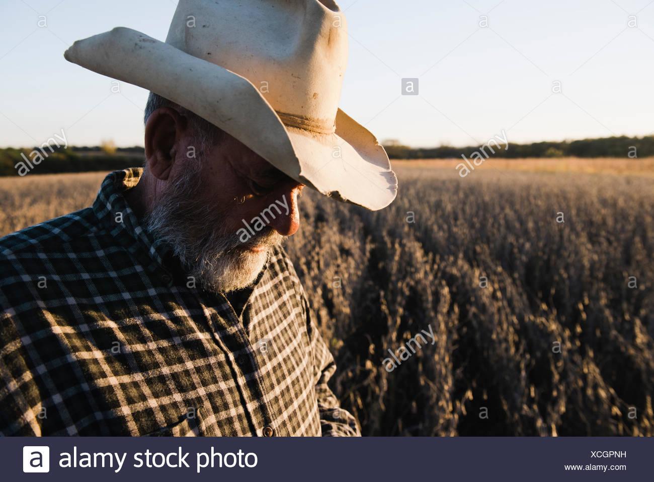Maschio anziano contadino che guarda il raccolto di soia, Plattsburg, Missouri, Stati Uniti d'America Foto Stock