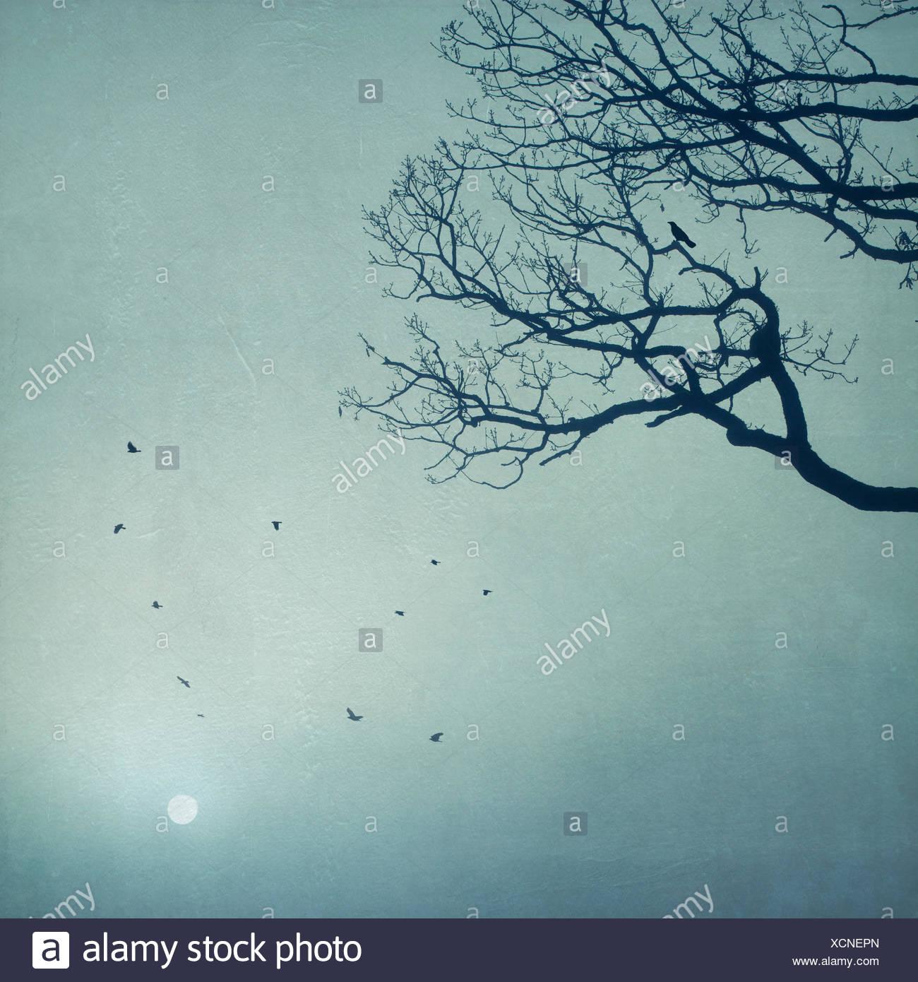 Silhouette di alberi e uccelli in volo di sunrise Immagini Stock