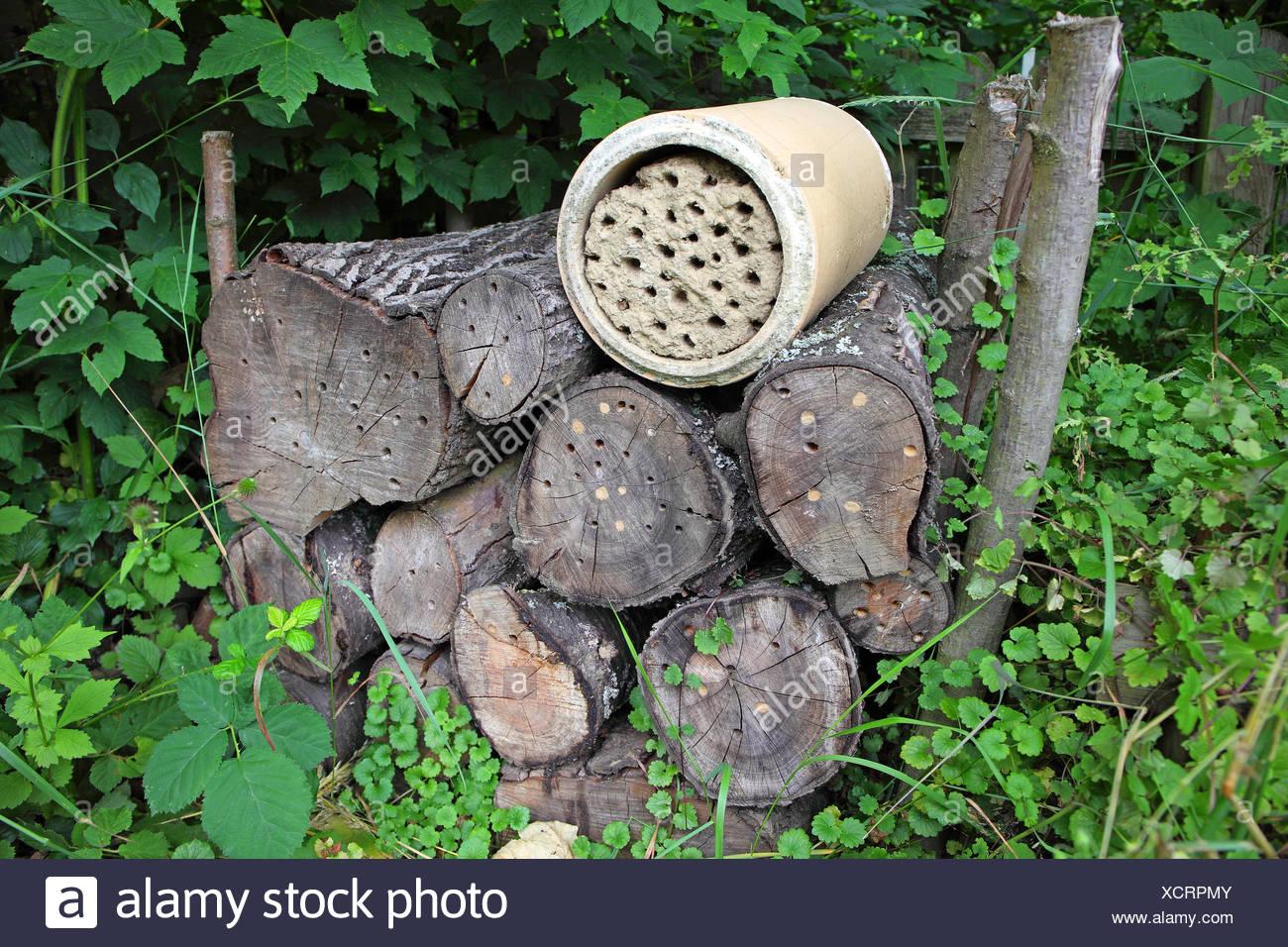 Palo di legno con forature come un aiuto di nidificazione per solitario api selvatiche, api solitarie, Germania Immagini Stock