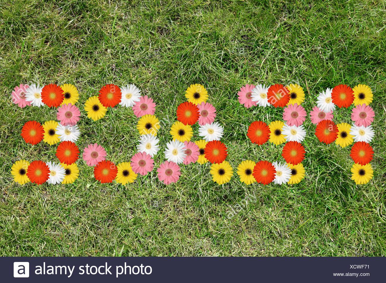 La pace la pace la pace della natura fiori di prato prato prato Immagini Stock