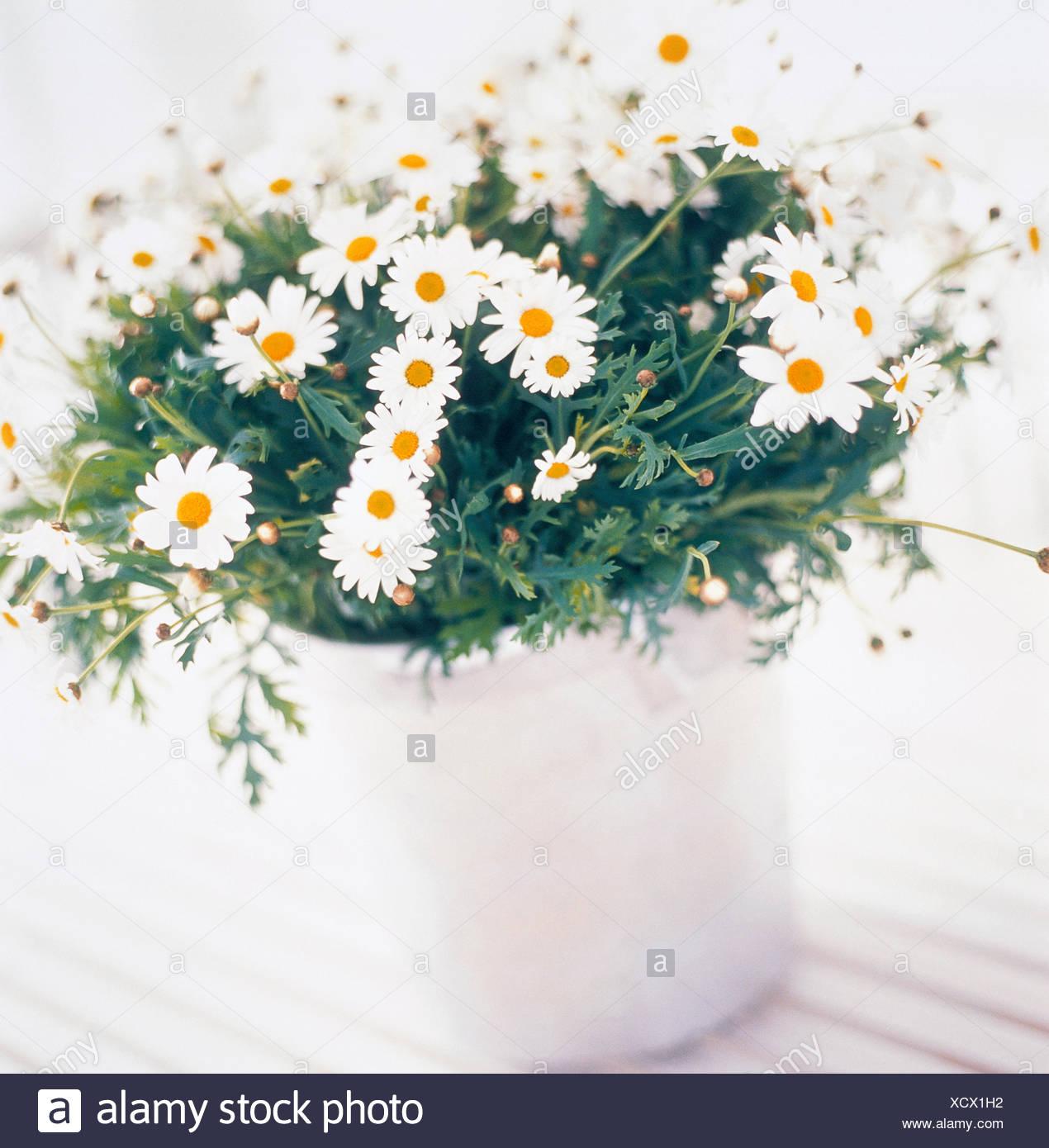Catalogo Fiori.Catalogo 2 Close Up Colore Immagine Fiore Fiori Pot Margherita