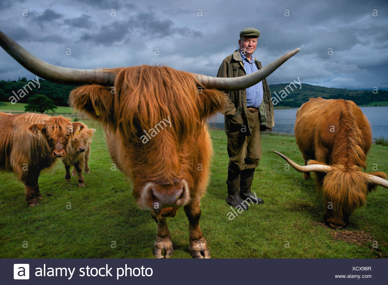 Un contadino con il suo Highland bestiame in una fattoria Connel. Immagini Stock