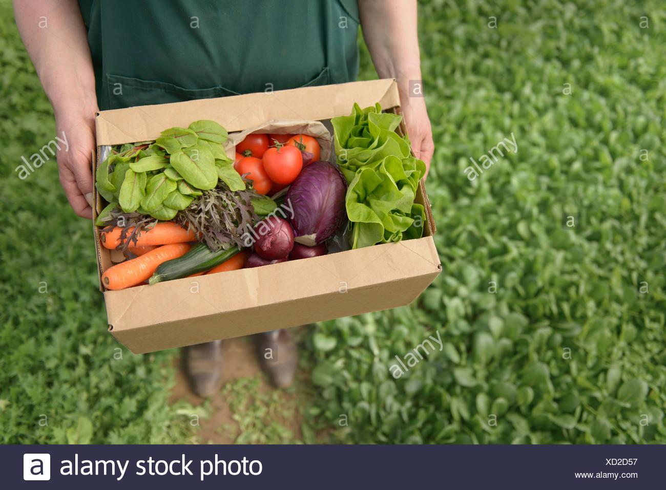 L'agricoltore che trasportano gli ortaggi biologici nella casella per la consegna, close up Immagini Stock