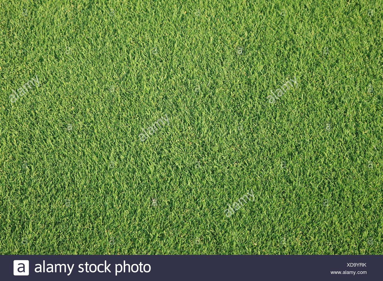 Erba sul campo da golf Immagini Stock