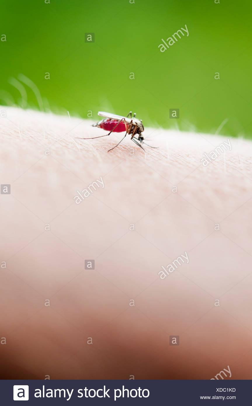Close-up di insetto sulla pelle umana Immagini Stock