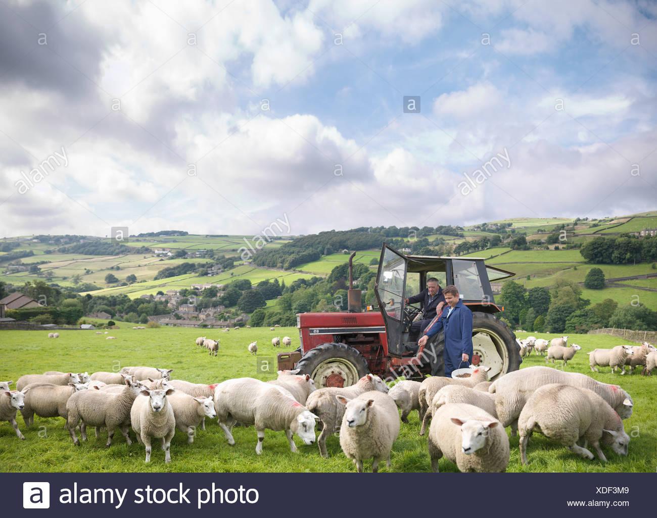 L'agricoltore nel trattore con il figlio guardando le pecore nel campo Immagini Stock