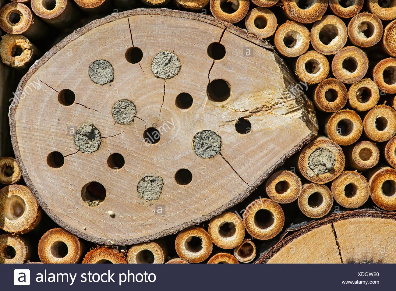 Bee hotel, artificiale aiuto di nidificazione per mason api, allevamento gallerie parzialmente sigillate con argilla del suolo Immagini Stock
