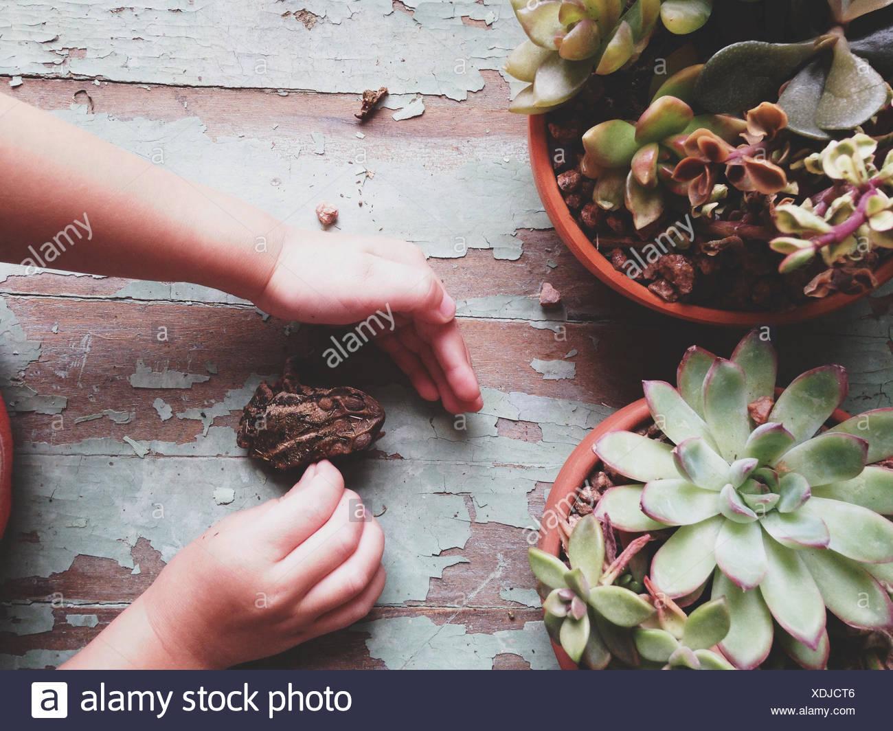 Un ragazzo e la sua Toad Immagini Stock