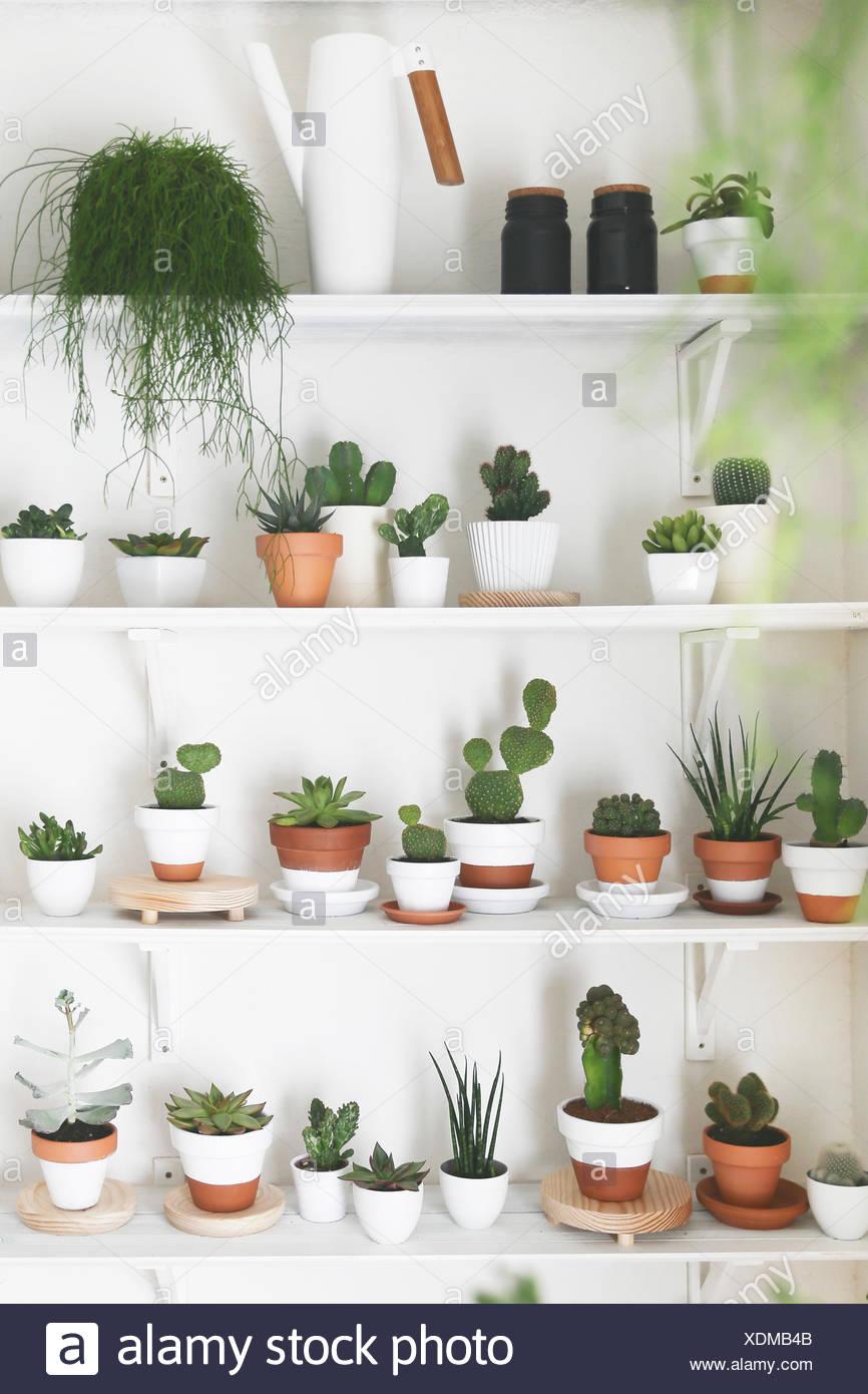 Piante Grasse Piccole Prezzi collezione di cactus e piante grasse foto & immagine stock