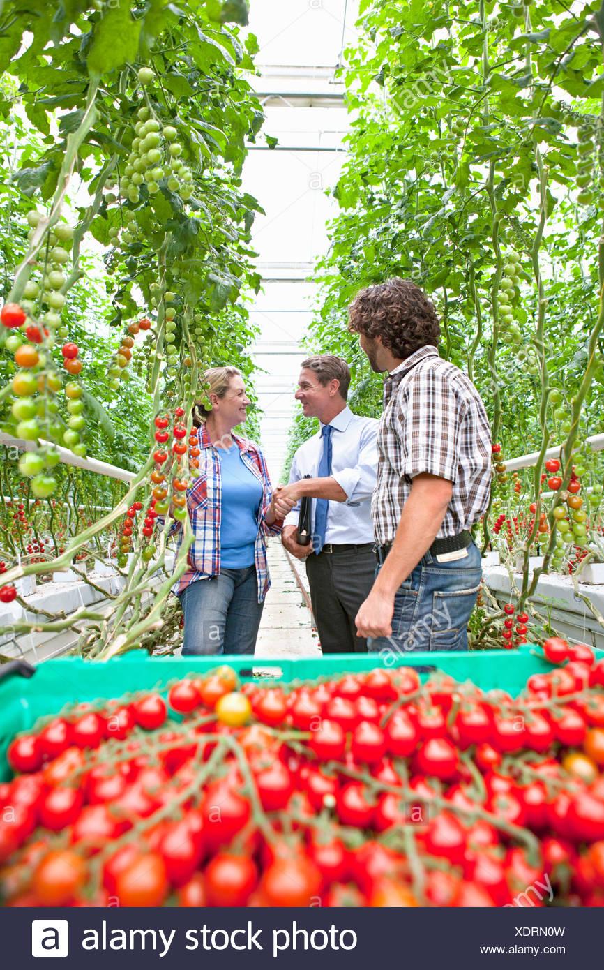 Imprenditore coltivatore e l'handshaking dietro ripe rosso i pomodori di serra Immagini Stock