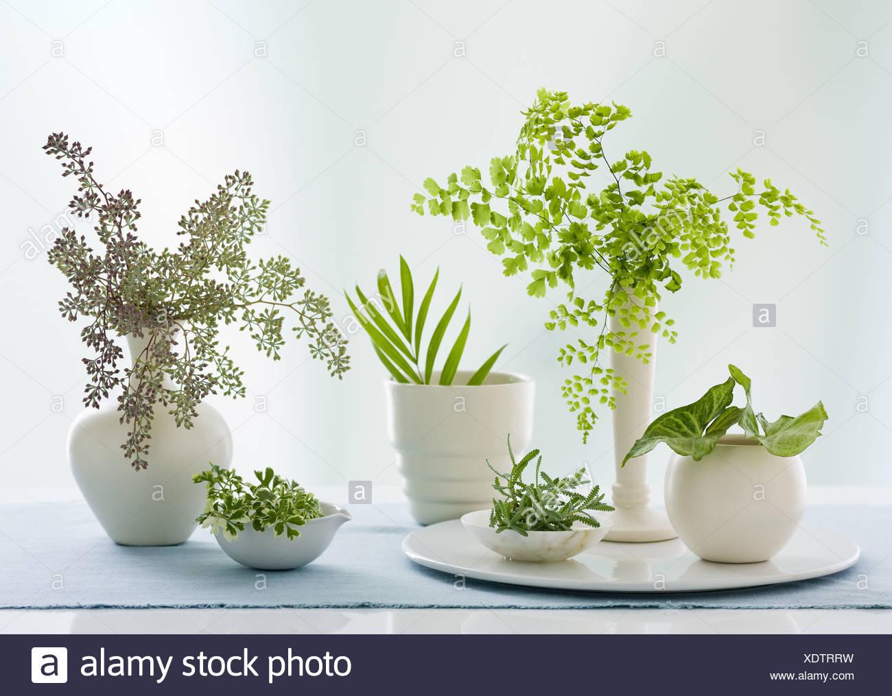 Maryland USA contenitori brocche varietà di foglie verdi Studio Immagini Stock