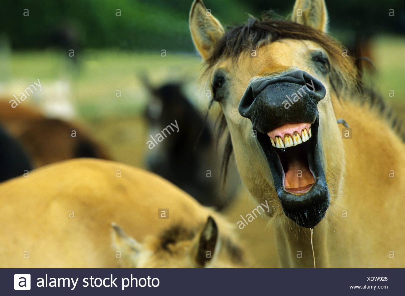 nitrito di cavallo da