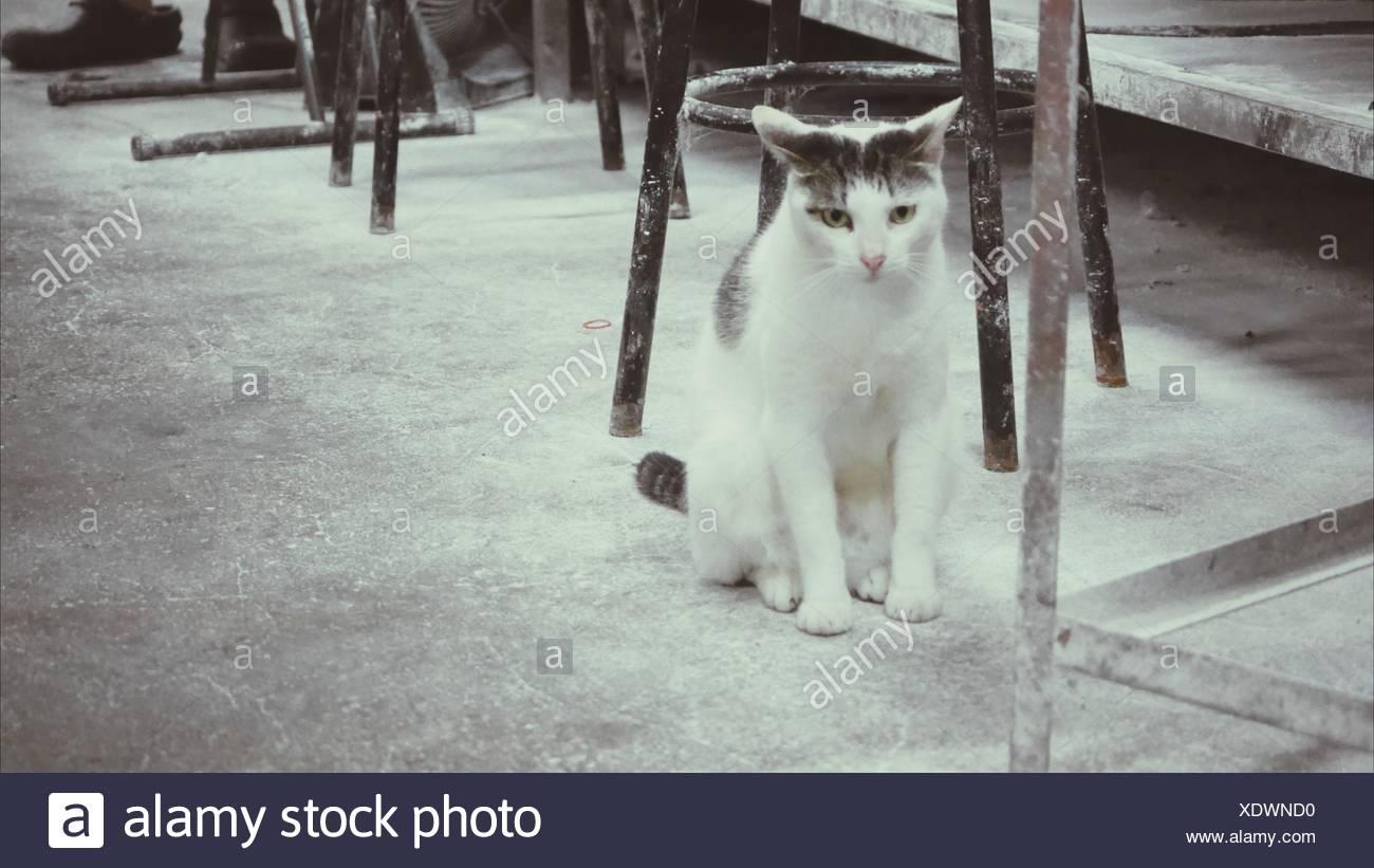 Gatto seduto da sgabelli in metallo sul marciapiede foto & immagine