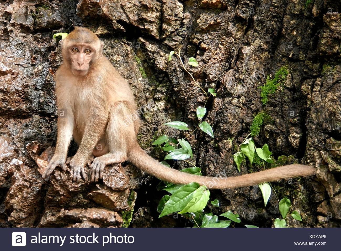 mammiferi Immagini Stock