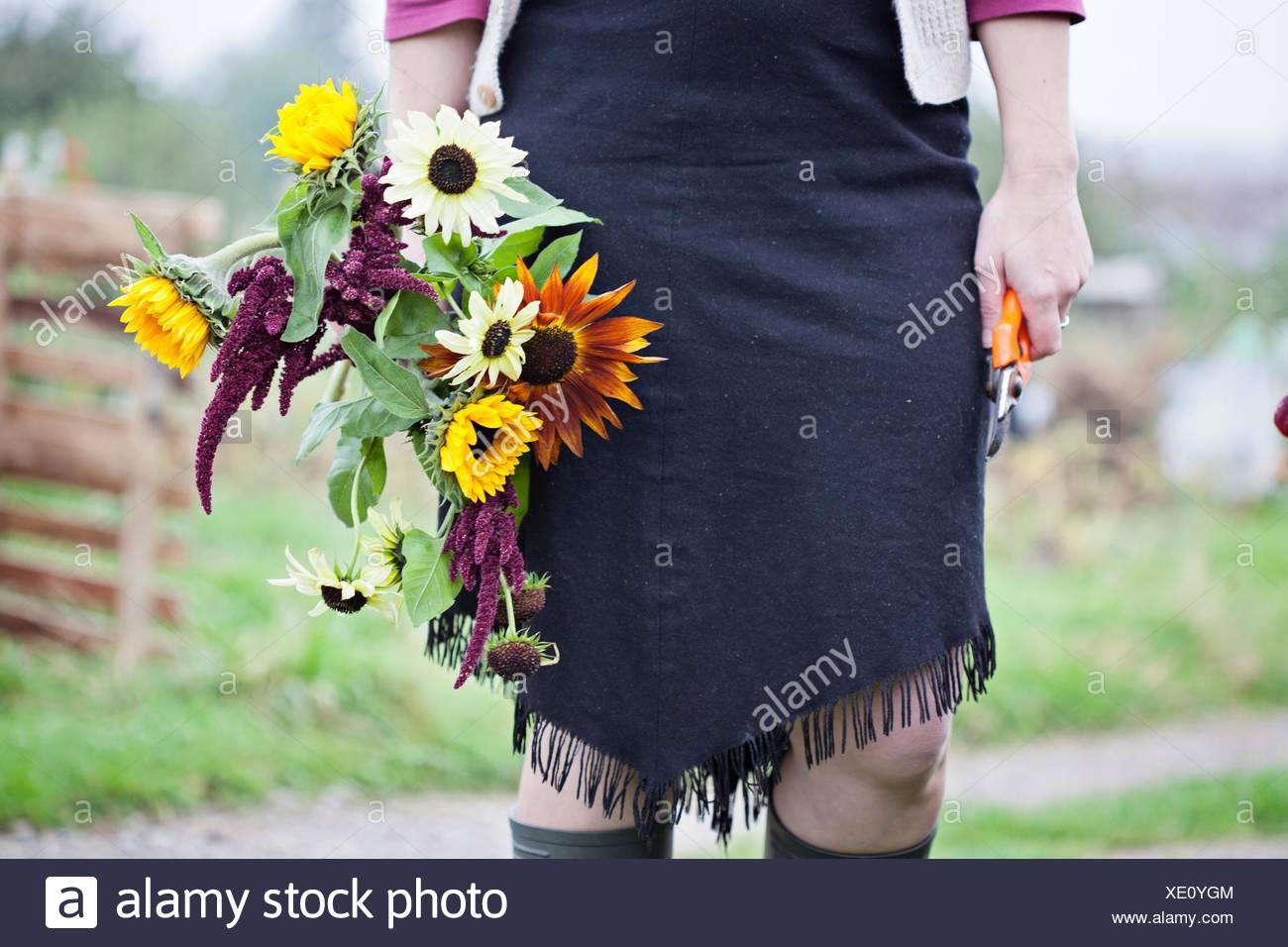 Vita scende vista della donna il taglio di fiori freschi in allotment Immagini Stock