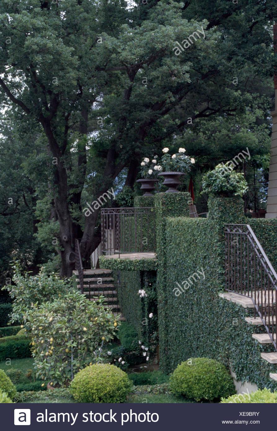 Alberi Di Alto Fusto E Di Gradini Di Pietra In Un Giardino A
