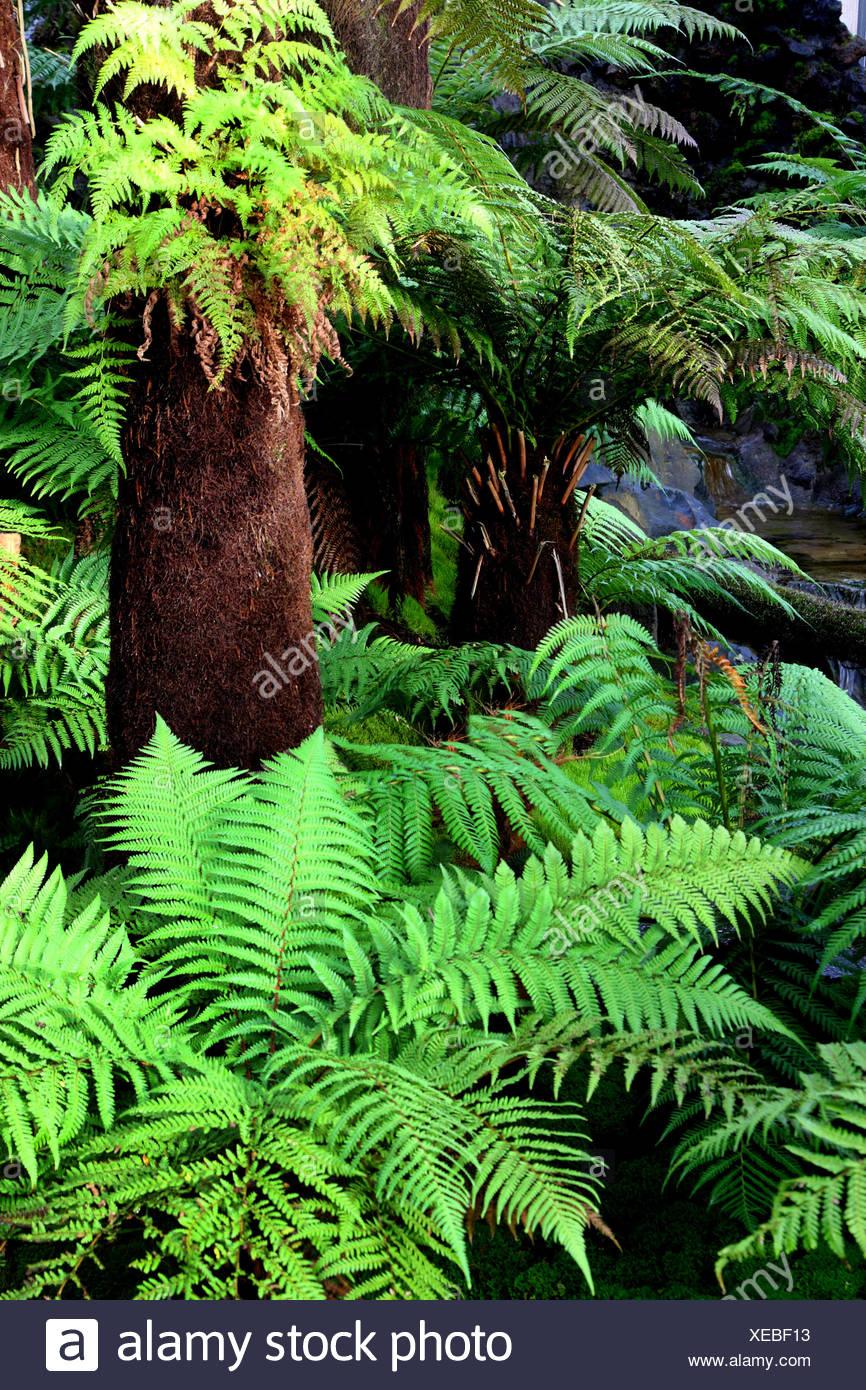 FELCI Antartide-FELCE albero della Tasmania